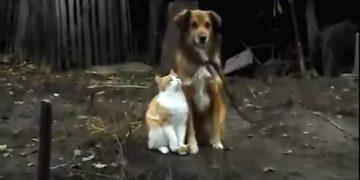 Кот и собака позировали хозяину на камеру. То, что произошло потом…