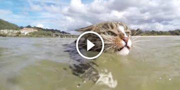 Умнее этой кошки в мире нет. Только взгляните, на ЧТО она способна!