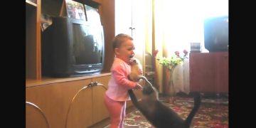 Заботливая кошка забрала своего котёнка у ребёнка. Животные – не детские игрушки!