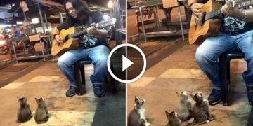 Уличный музыкант уже собирался уходить, как вдруг к нему пожаловали необычные зрители…