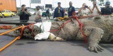 На Филиппинах поймали самого большого крокодила в мире