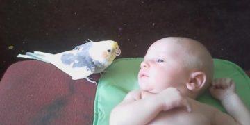 Попугайчик поет колыбельную младенцу. Умильные кадры!
