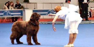 Девушка сделала поклон перед псом, а он в ответ растрогал всех зрителей
