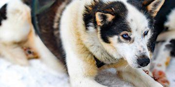 Собака с щенком лежали на обочине дороги и едва подавали признаки жизни