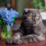 Кот невидимка — жил в квартире, найти не могли