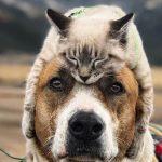 Путешествия кота Балу и пса Генри