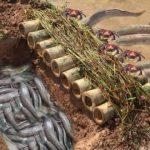 Эффектная ловушка из бамбука для ленивой рыбалки на берегу водоёма