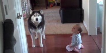 Мама застукала хаски и малыша за разговором