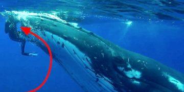 Гигантский кит бросился на женщину-дайвера. Когда она поняла причину его поступка -то не смогла сдержать слез!