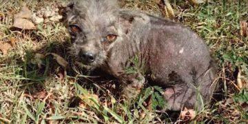 Ветеринары сказали, что щенка необходимо усыпить. Но девушка так просто не сдалась