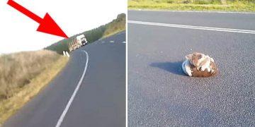 Мохнатый комок катился ей прямо под колеса! Женщина остановила машину и увидела ТАКОЕ…