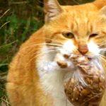 Бездомная кошка берет еду, только если она в пакете. Прохожий решил проследить за ней