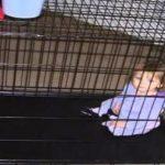 Пока родителей не было дома, малышку держали в клетке. История с трагическим концом