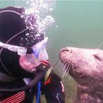 Водолаз не понял, что нужно этому тюленю. Внезапно, животное сделало это… Невероятно!