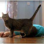 Хозяин притворился мертвым, чтобы посмотреть на реакцию своей кошки