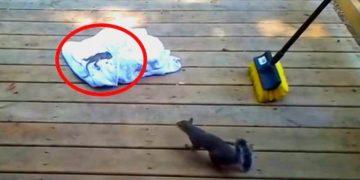 Бельчонок вывалился из дупла и люди перенесли его в безопасное место. Наконец, показалась мама, но примет ли она его?