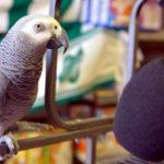Попугай Жако читает стихотворение. Так не каждый первоклассник сможет!