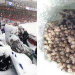 Если вы жалуетесь на холод, вот вам 10 фото о том, какой зима может быть на самом деле!