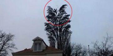 Он просто снимал дерево. Но на 0:18 произошло то, что он запомнит надолго!