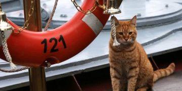 Как кот случайно стал подводником и нес свою службу исправно…