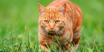 Рыжий кот был предан ему до последней минуты своей жизни. Удивительная история!