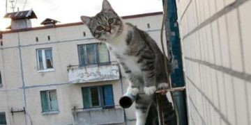 Каждый вечер соседский кот выслушивал девушку. Но, однажды, он решил утешить ее по-настоящему!