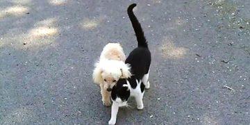 Кошка помогает ослепшему другу-песику найти дорогу домой. Трогает до слез!