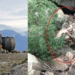 Женщина-антрополог провела 7 лет в плену у эльфов. Посмотрите, что с ней стало!