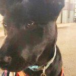 Хозяйка накричала на собаку за непослушание, а потом поняла, что он спас ей жизнь!