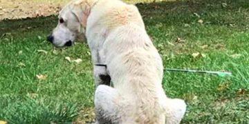 Она увидела свою собаку на газоне, он не шевелился, а его тело было насквозь пробито стрелой…