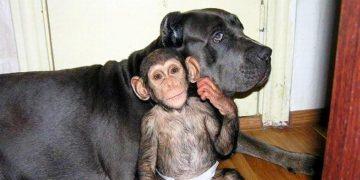 От этой крохи отказалась мама, но неожиданно его «усыновила» собака. Чудесная семья!