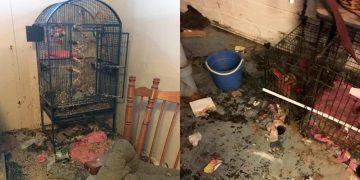 Хозяин упал в обморок, когда увидел, что квартиранты оставили в этой квартире!