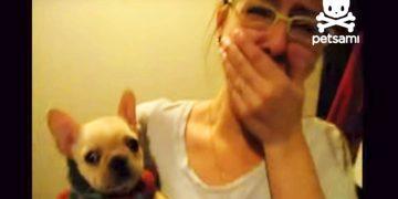 Она сказала своей собачке «Я люблю тебя» — Но такого ответа хозяйка не ожидала!
