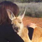 Эта девушка спасла 5-месячного кенгуру. Уже 10 лет он не устает ее благодарить