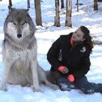 Громадный волк выходит к ней на опушку. То, что он делает вас очень удивит!