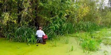 Он услышал плач на болоте и прыгнул прямо в воду, где притаились аллигаторы! Только посмотрите кого он спас!