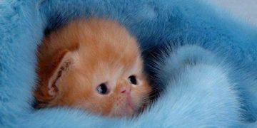 Крошечный котенок дергался во сне. То, что сделала мама-кошка — бесподобно!