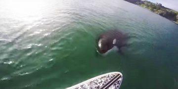 Парень просто катался на Paddle Board, но внезапно в воде он увидел это!