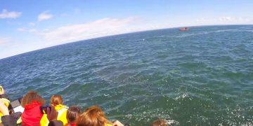 Огромный кит решил подшутить над туристами. Только взгляните, ЧТО сделал морской зверь!