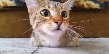 Кот, который смотрит фильм ужасов, стал звездой Интернета. Вы должны это увидеть!