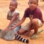 Мальчики гладят лемура. Увидев на 0:14, что сделало животное, вы не удержитесь от смеха!