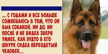 Как наш пес вора поймал и домой привел для извинений…