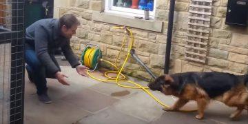 Собака несколько месяцев была в разлуке с хозяином. Их встречу надо видеть своими глазами!