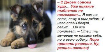 Читала и плакала… – Отец, ты мучаешь не только себя, но и свою собаку. Пора принять решение. Ну, решись наконец!
