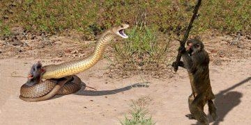 Животные СПАСАЮТ друг друга — Никто бы не поверил, если бы это не сняли на камеру!