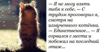 От таких историй на душе становится теплее! —Я не могу взять тебя к себе. — С трудом проговорил я, смотря на измученного котёнка. — Единственное…