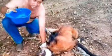 Обессиленный волк был на волосок от смерти. То, что сделал этот мужчина — невероятно!