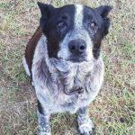Девочка 3-х лет пропала в лесу, а через 15 часов к её дому пришла старая собака