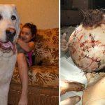 В Одессе, огромный алабай едва не загрыз маленького ребенка. Брат девочки выпустил собаку из вольера, а потом…