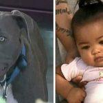 Питбуль схватил малыша за подгузник попытался вынести из дома. Мама до сих пор не устает благодарить собаку за спасение крохи!